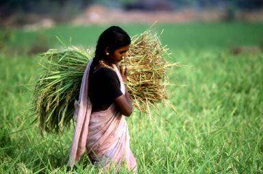 When life gives you a lemon, farm it | Chennai News ...